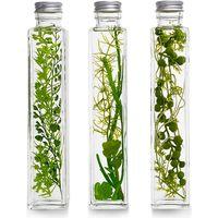 ハーバリウム/多肉植物3種セット プリマ(直送品)