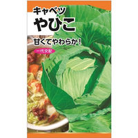 ニチノウのタネ やひこ甘藍(キャベツ) 日本農産種苗 4960599114501 1セット(3袋入)(直送品)