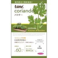 ニチノウのタネ K&Gパクチー 日本農産種苗 4960599160331 1セット(5袋入)(直送品)