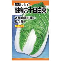 ニチノウのタネ タキイ交配 耐病六十日白菜 日本農産種苗 4960599234704 1セット(3袋入) (直送品)