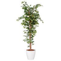 観葉植物・花瓶