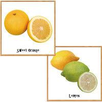 マッチングジャパン フチなし ラミあり フレームステッカー リアル果物『果物_10』 CO-9097-AS 1個(2枚セット)(直送品)