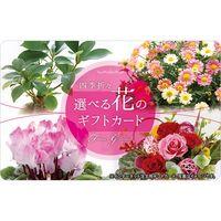 【イベント、ノベルティ、プレゼントなどにおすすめです!】伊藤忠食品 選べる花のギフトカード (専用封筒、台紙セット) isc-394894 1枚(直送品)