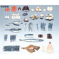 イワイサンプル フードモデル(魚介類) するめ20g 4-112 1個 62-8599-17(直送品)