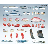 イワイサンプル フードモデル(魚介類) さんま70g 4-8 1個 62-8597-90(直送品)