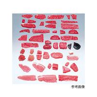 イワイサンプル フードモデル(獣鳥肉類) 豚バラ薄切20g 5-39 1個 62-8600-11(直送品)