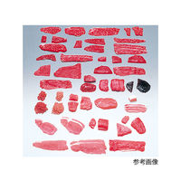 イワイサンプル フードモデル(獣鳥肉類) 豚もも薄切脂身付き15g 5-47 1個 62-8600-19 ナビスカタログ(直送品)