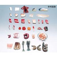 イワイサンプル フードモデル(魚介類) するめいか40g 4-43 1個 62-8598-39 ナビスカタログ(直送品)