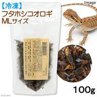 リーフ フタホシコオロギ MLサイズ 2250002118601 1個(直送品)