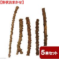 リーフ 形状おまかせ 山椒の木 細枝 ロング 2250002313716 1セット(直送品)