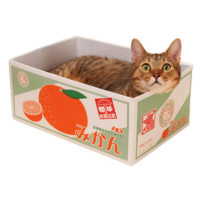 2月22日「猫の日」は、おもちゃを使って猫と遊ぼう