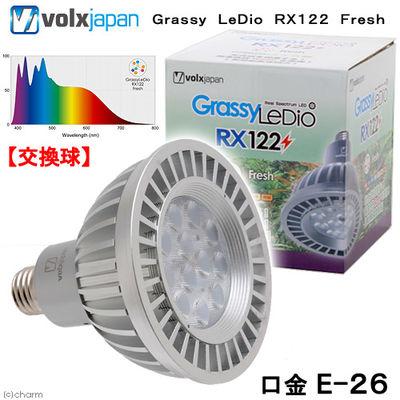 ボルクスジャパン Grassy LeDio RX122 Fresh/フレッシュ 180379