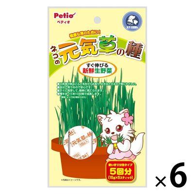 ネコの元気草の種 犬猫用 6個