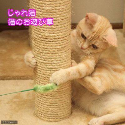 じゃれ猫 猫のお遊び草 猫じゃらし 猫用おもちゃ 68368 1セット(3個入)