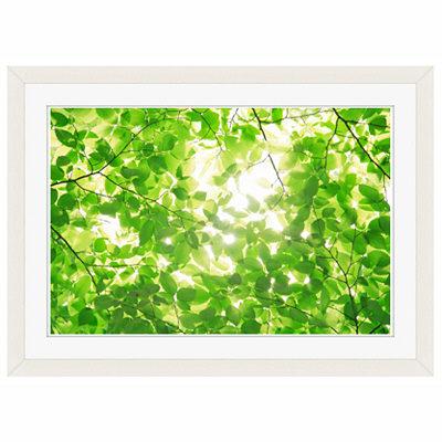 アートプリントジャパン 「新緑と光」 フレーム/S/ホワイト 1枚