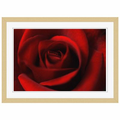 アートプリントジャパン 「Rose」 フレーム/S/木目 1枚
