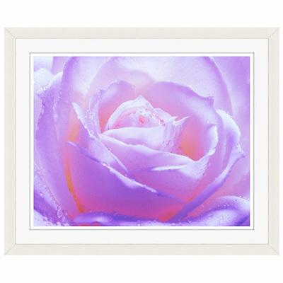アートプリントジャパン 「紫色の薔薇」 フレーム/S/ホワイト 1枚