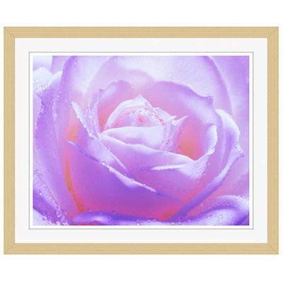 アートプリントジャパン 「紫色の薔薇」 フレーム/S/木目 1枚
