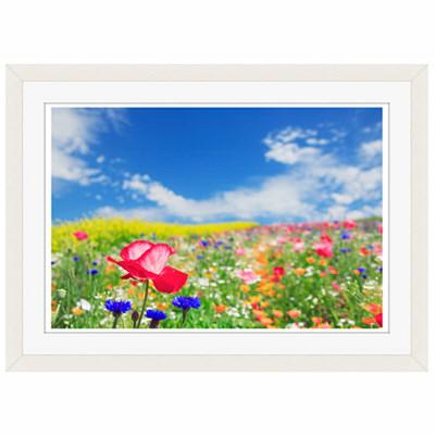 アートプリントジャパン 「花畑に咲くポピー」 フレーム/S/ホワイト 1枚