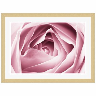 アートプリントジャパン 「Close-up View of Pink Rose」 フレーム/S/木目 1枚
