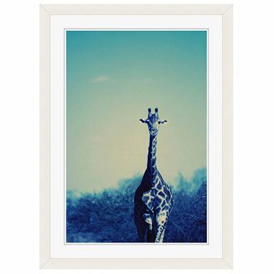 アートプリントジャパン 「Reticulated Giraffe」 フレーム/S/ホワイト 1枚