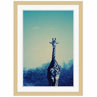アートプリントジャパン 「Reticulated Giraffe」 フレーム/S/木目 1枚