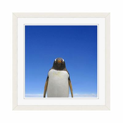 アートプリントジャパン 「青空とペンギン」 フレーム/S/ホワイト 1枚
