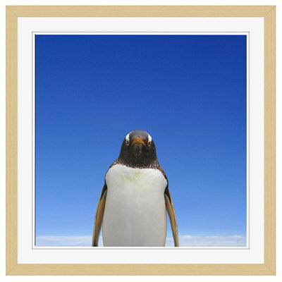 アートプリントジャパン 「青空とペンギン」 フレーム/M/木目 1枚