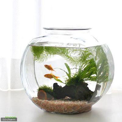 日本ペットフード おしゃれなガラス製金魚鉢 太鼓鉢 中(3.8リットル) 57026