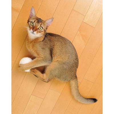 ヤマヒサ マシュマロボール ホワイト 猫 おもちゃ 205498 1セット(2個入)