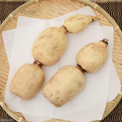 ぱっくん・フーズ 国産 れんこん 23g フルーツ&ベジ 蒸し野菜チップス 174750