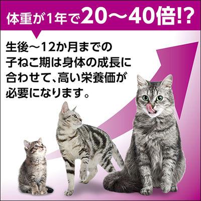 カルカンパウチ 子猫用まぐろかつお×16