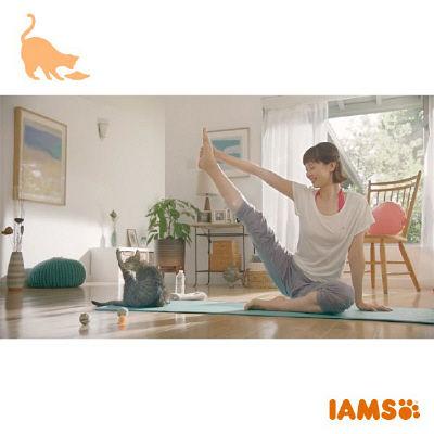 アイムス 成猫インドアチキン 1.5kg