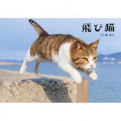 飛び猫/五十嵐健太