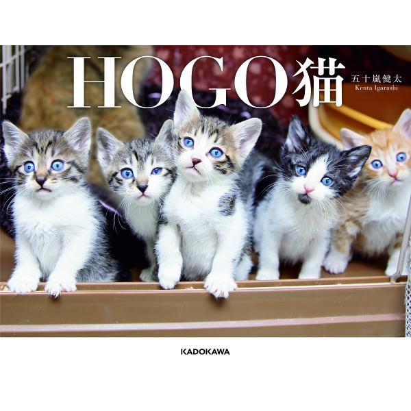 HOGO猫/五十嵐健太