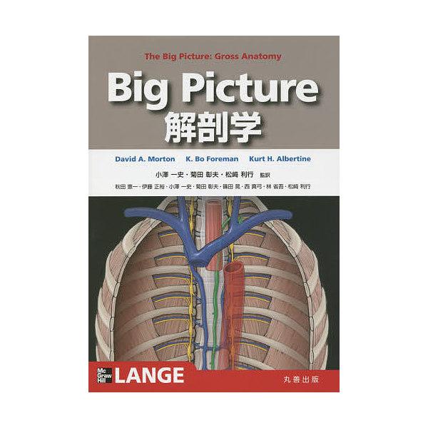 Big Picture解剖学/DavidA.Morton/K.BoForeman/KurtH.Albertine