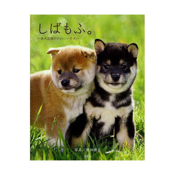 しばもふ。 柴犬広場のかわいい子犬/増田勝正