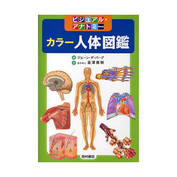 カラー人体図鑑 ビジュアル・アナトミー/ジェーン・ダ・バーグ/金澤寛明