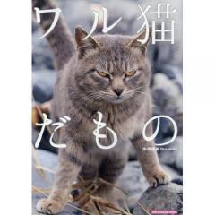 ワル猫だもの/南幅俊輔
