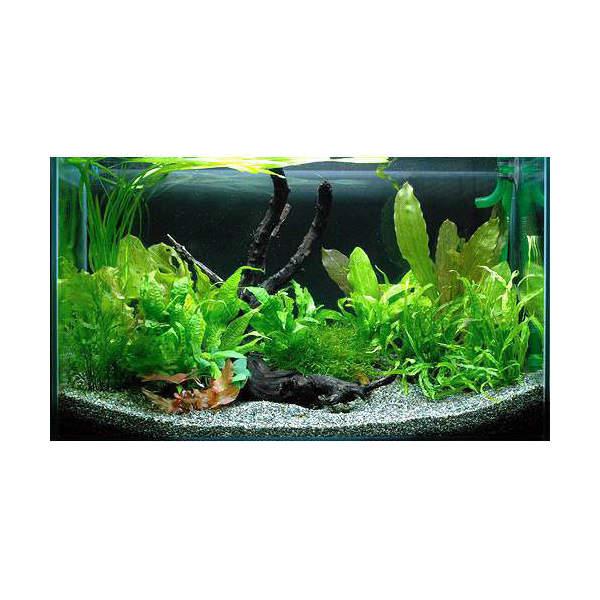 (水草 熱帯魚)シダ系レイアウトセット 60cm水槽用(1パック) 本州四国限定