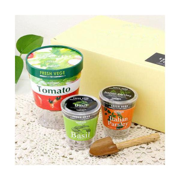 フレッシュギフト イタリアンセット 春夏限定 3個入 家庭菜園 キッチン菜園 室内園芸