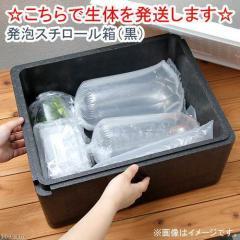 (こちらで生体を発送します)発泡スチロール箱(黒) 対象生体同時購入のみ