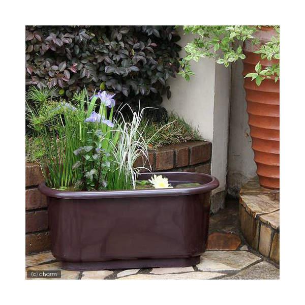 (ビオトープ/水辺植物)リサイクルプランターで楽しむビオトープセット(ダークブラウン 幅66cm)(説明書付) 本州・四国限定