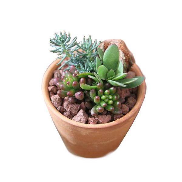(観葉植物)私のオアシス 多肉3種のシンプルテラコッタ寄せ植え(お買い得5鉢セット) 説明書付き