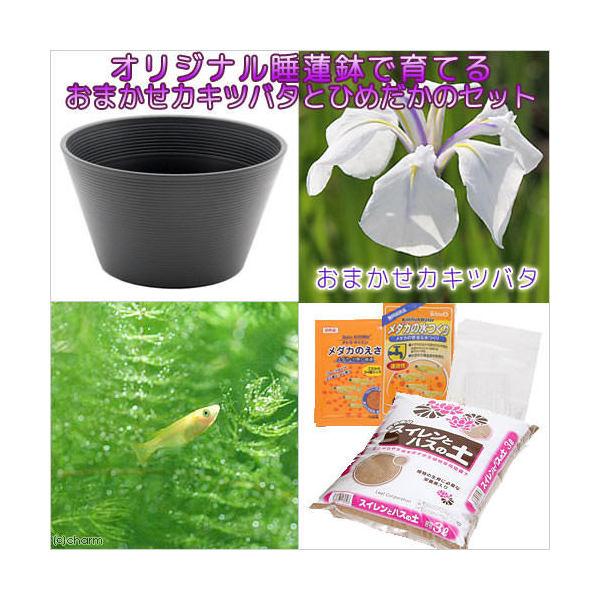 (ビオトープ/水辺植物)チャーム14号 プロが考えた睡蓮鉢で育てる(グレー) カキツバタとひめだかのセット 本州・四国限定