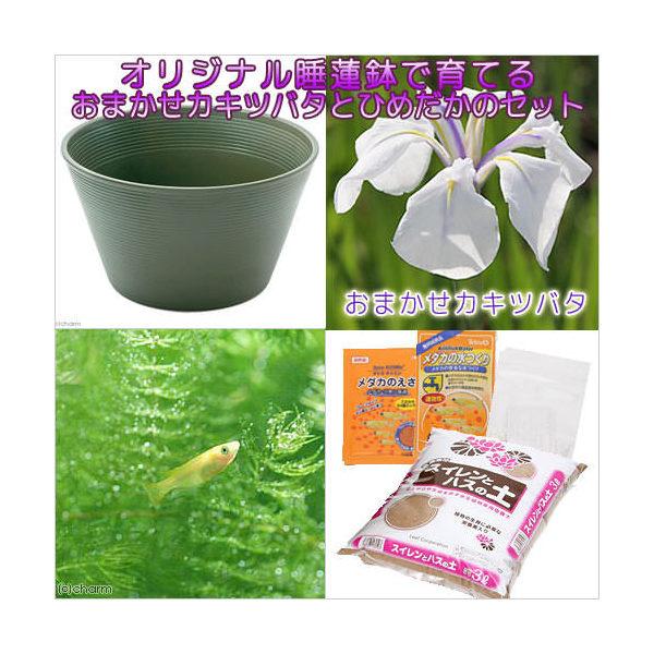 (ビオトープ/水辺植物)チャーム14号 プロが考えた睡蓮鉢で育てる(グリーン)カキツバタとひめだかのセット 本州・四国限定 お一人様1点限り