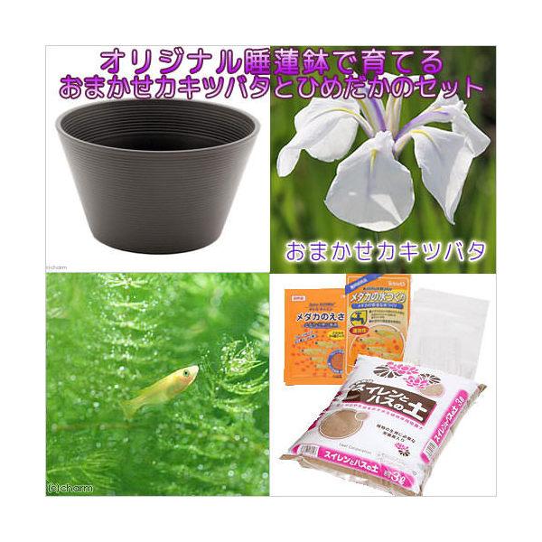 (ビオトープ/水辺植物)チャーム14号 プロが考えた睡蓮鉢で育てる(ブラウン) カキツバタとひめだかのセット 本州・四国限定