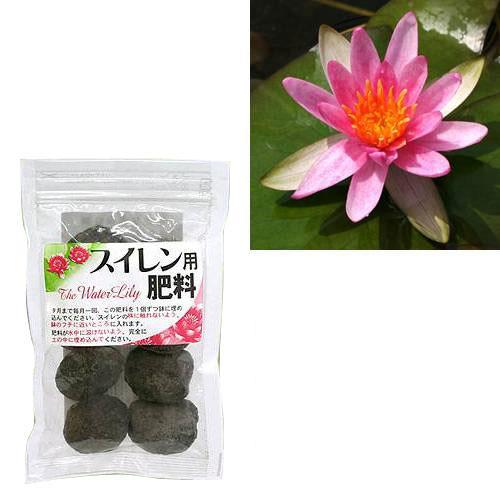 (ビオトープ)睡蓮 蕾付き 温帯性睡蓮(スイレン) 赤(1ポット) + 睡蓮用 肥料 沖縄不可