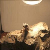 形状お任せ 爬虫類用バスキングスポット ~ウォーム・ストーン~ 小2個 爬虫類 レイアウト用品