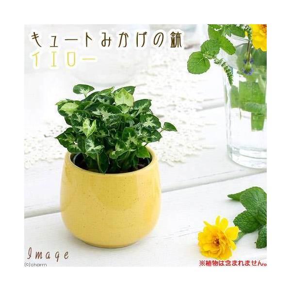 キュートみかげの鉢 イエロー(φ7.0×H7.0cm)(ハイドロ苗6φに対応)
